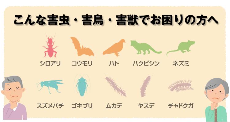 高千穂白ありでは、シロアリ駆除のほかコウモリ・ハト・ハクビシン・ネズミ・スズメバチ・ゴキブリ・ムカデ・ヤスデ・チャドクガなどの駆除も承っております。